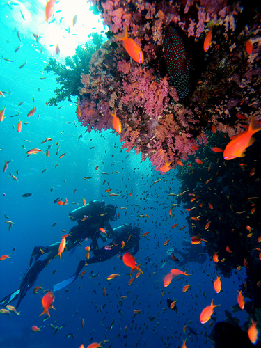 Scuba Diving For Experienced Divers